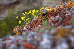 Crescimento de flores na rocha Fotos de Stock