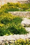 Crescimento de flores selvagens em ruínas da parede, Victoria, Gozo imagens de stock