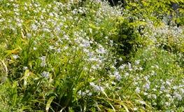 Crescimento de flores sobre um monte das gramas fotos de stock royalty free