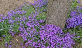 Crescimento de flores violeta pequeno em torno de uma árvore imagens de stock