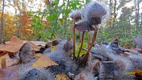 Crescimento de molde no fungo imagem de stock