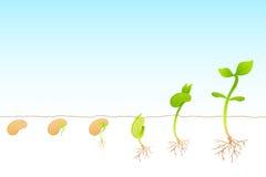 Crescimento de planta Imagens de Stock Royalty Free