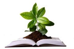 Crescimento de planta verde do livro fotografia de stock