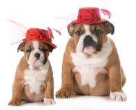 Crescimento do cachorrinho Imagens de Stock Royalty Free