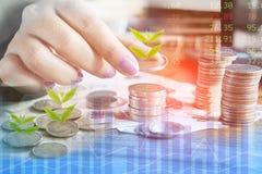 Crescimento do negócio, investimento, conceito do sucesso com a mão da mulher que conta a moeda com crescimento da árvore Foto de Stock