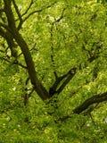 Crescimento do ramo e da mola Foto de Stock Royalty Free