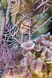 Crescimento do recife Imagens de Stock Royalty Free