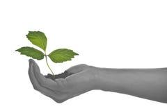 Crescimento em uma mão Fotografia de Stock Royalty Free
