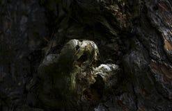 Crescimento estranho da casca de uma árvore Fotografia de Stock Royalty Free