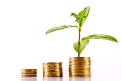 Crescimento financeiro Fotografia de Stock