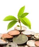 Crescimento financeiro Fotos de Stock Royalty Free