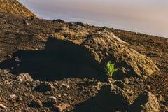 Crescimento no solo duro Imagens de Stock