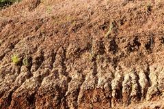 Crescimento no solo seco Foto de Stock