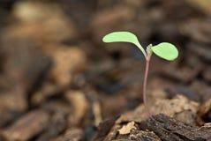Crescimento novo Imagens de Stock