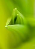 Crescimento novo da mola com foco seletivo imagens de stock royalty free