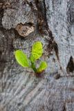 Crescimento novo na árvore fotos de stock