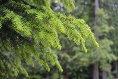 Crescimento novo no ramo de árvore Fotografia de Stock