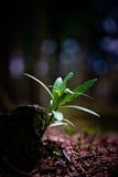 Crescimento pequeno da planta Fotografia de Stock
