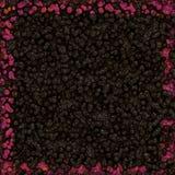 Crescimento simétrico das bactérias Imagem de Stock Royalty Free