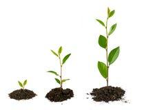 Crescimento vegetal Imagem de Stock Royalty Free