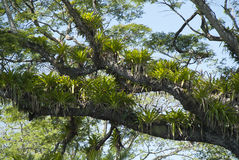 Floresta tropical tropical 3 foto de stock