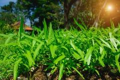 Crescimento vegetal no jardim Fotografia de Stock Royalty Free
