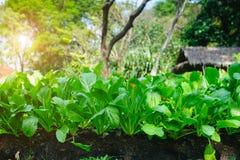 Crescimento vegetal no jardim Imagem de Stock Royalty Free