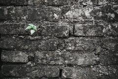 Crescimento verde pequeno da árvore acima do tijolo velho da quebra imagem de stock royalty free