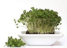 Crescione dell'insalata con la parte tagliata Fotografia Stock