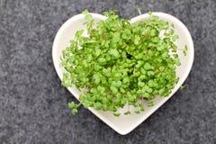 Crescione della senape dell'insalata Fotografia Stock