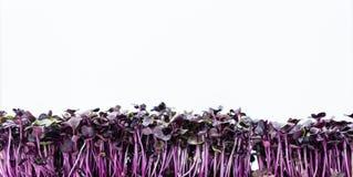 Crescione isolato su bianco Fotografia Stock