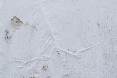 Crescita astratta della radice nell'ambito di pittura murale immagini stock libere da diritti