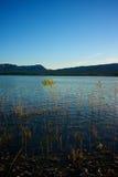 Crescita dal lago blu Fotografie Stock