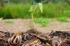 Crescita degli alberi fotografie stock