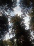 Crescita degli alberi Fotografie Stock Libere da Diritti
