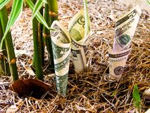 Crescita dei soldi. Immagini Stock