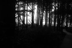 Crescita del cedro della palude della palude del sentiero costiero della foresta pluviale vecchia Immagini Stock