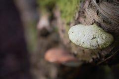 Crescita del terreno boscoso Fotografia Stock Libera da Diritti