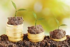 crescita dell'albero alta ed impilata sulle monete Immagine Stock Libera da Diritti