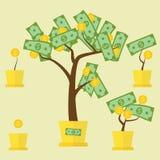 Crescita dell'albero dei soldi Immagine Stock