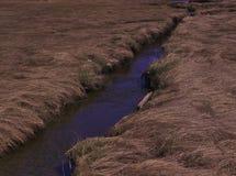 Crescita 3485 dell'erba di marrone del ruscello nuova fotografie stock