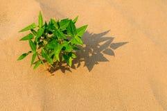 Crescita della pianta Immagini Stock