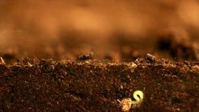 Crescita della pianta Seme che cresce dal suolo Vista del overground e della metropolitana