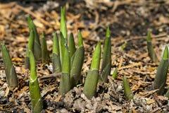 Crescita della primavera Fotografie Stock