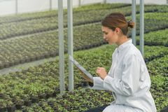 Crescita delle piantine della serra Ingegnere agricolo femminile fotografia stock