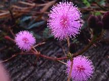 Crescita di fiori Fotografia Stock