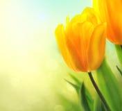Crescita di fiori del tulipano della primavera Fotografia Stock Libera da Diritti