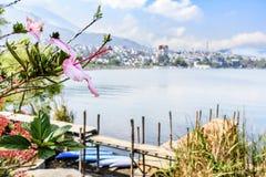 Crescita di fiori dell'ibisco accanto al lago con la città nel fondo fotografie stock libere da diritti