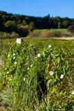 Crescita di fiori delle piante selvatiche sul recinto Fotografie Stock
