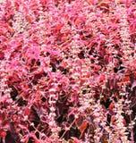 Crescita di fiori rosa e bianchi ad un parco Fotografie Stock